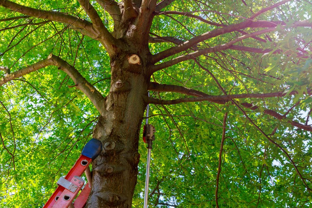 columbus tree service ga